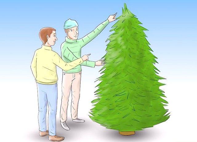 रियल क्रिसमस पेड़ों की देखभाल कैसे करें