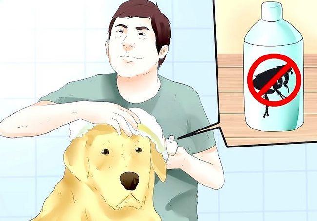 कैसे कुत्तों पिस्सू को मारने के लिए