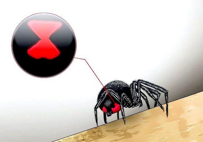 कैसे एक जहरीला मकड़ी को मारने के लिए