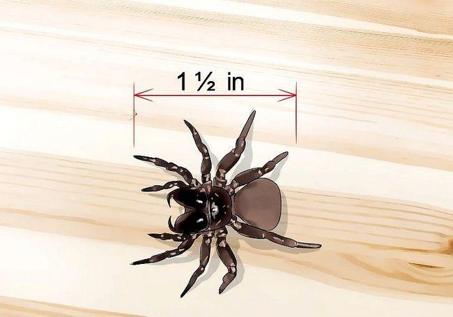किल ए जूमस स्पाइडर चरण 3 नामक छवि