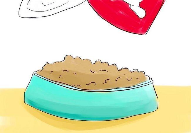 कुत्ते के लिए एक विरोधी क्लीनर के रूप में शराब बनानेवाला खमीर का उपयोग कैसे करें