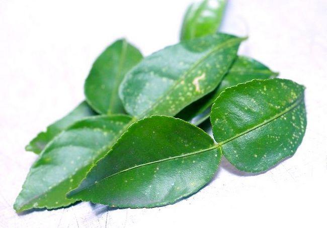 कम्बावा पत्तियों का उपयोग कैसे करें
