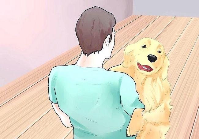 कुत्तों के चरण 2 पर प्रंग कॉलर का प्रयोग करें शीर्षक वाला चित्र