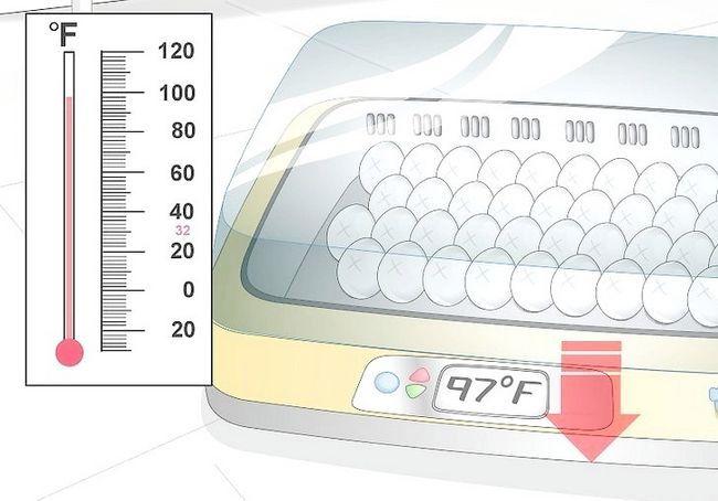 हैच अंडे के चरण 13 में इन्क्यूबेटर का उपयोग करें