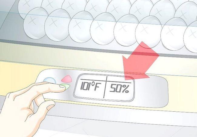 हैच अंडे के चरण 16 में इन्क्यूबेटर का उपयोग करें