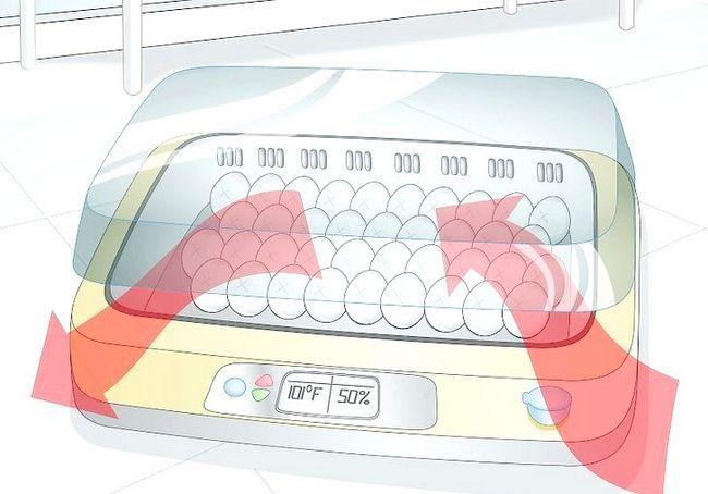 हैच अंडे के चरण 17 के लिए इनक्यूबेटर का उपयोग करें