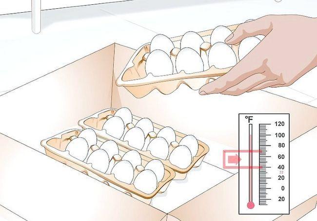 हैच अंडे चरण 8 के लिए इनक्यूबेटर का उपयोग करें