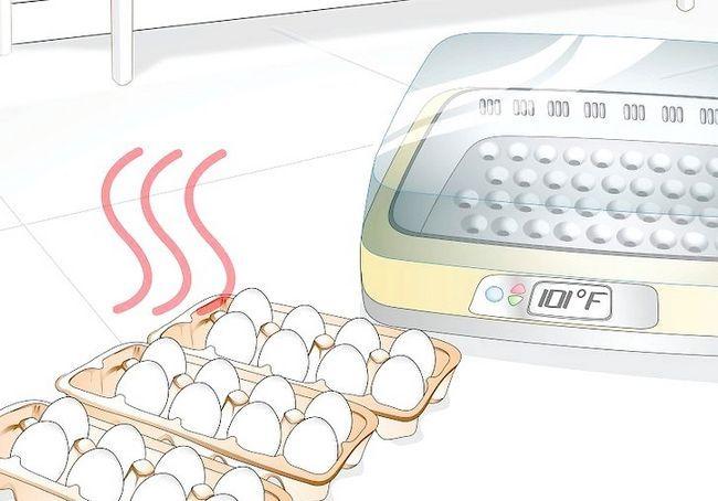 हैच अंडे के लिए इन्क्यूबेटर का उपयोग करें शीर्षक शीर्षक स्टेप 10
