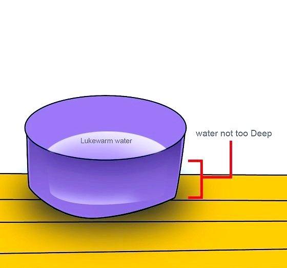 छानने वाला पानी चरण 4 नामक छवि