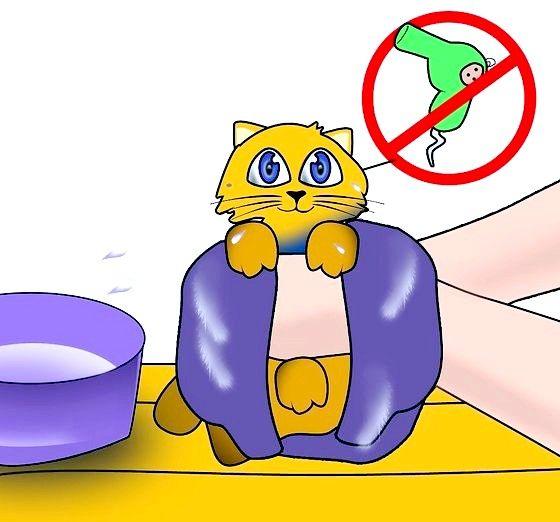 तौलिया के साथ अपने बिल्ली का बच्चा स्टेप 10 शीर्षक वाला चित्र