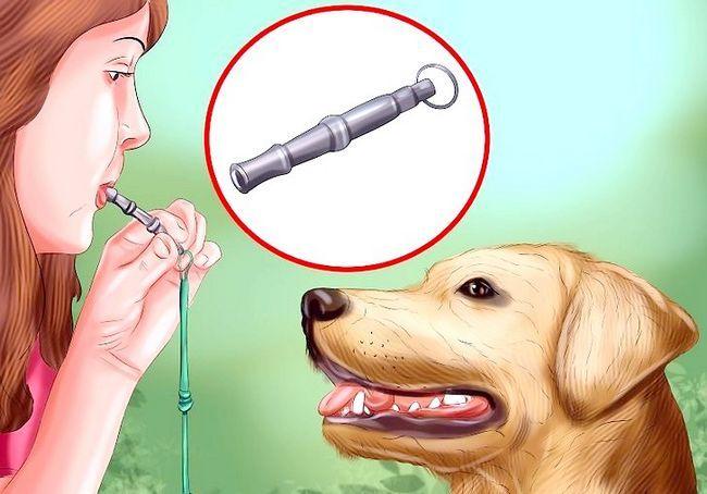 कैसे एक कुत्ते सीटी का उपयोग करें