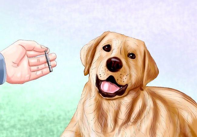 छवि का प्रयोग करें कुत्ता सीटी का प्रयोग करें चरण 2
