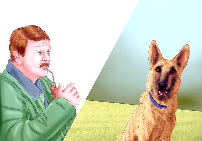 एक कुत्ता शीस्ट चरण 4 का उपयोग करें चित्र शीर्षक