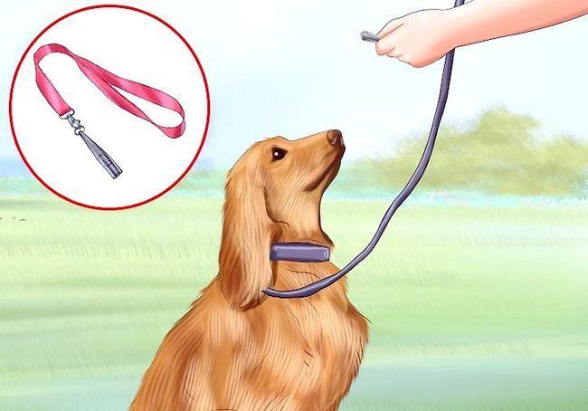 एक कुत्ता सीटी का उपयोग करें शीर्षक वाला चित्र चरण 6