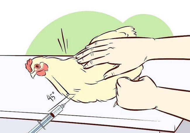 छवि का शीर्षक वैक्सीनेट चिकन चरण 18
