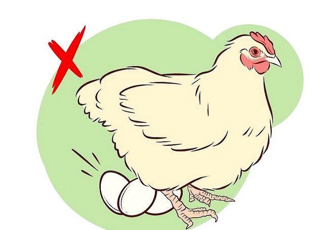 छवि का शीर्षक वैक्सीनेट चिकन चरण 2