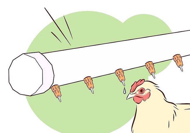 छवि शीर्षक वैक्सीनेट चिकन चरण 29