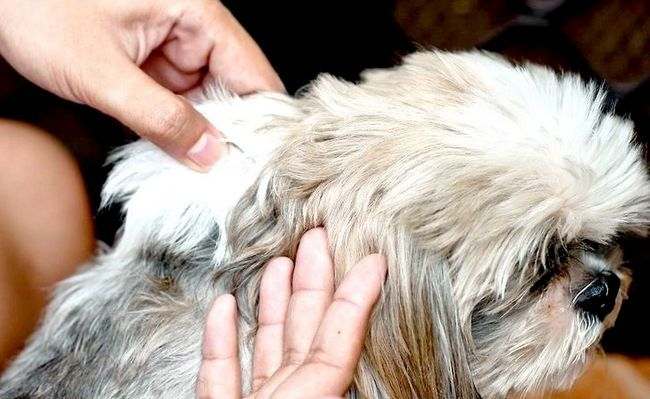 एक कुत्ता चरण 2 के लिए एक वैक्सीन प्रशासित शीर्षक छवि
