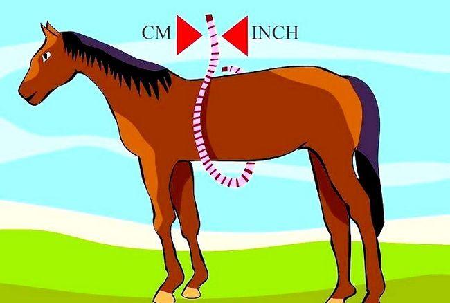 मीट्रिक व्हील के साथ एक घोड़े के वजन का मूल्यांकन कैसे करें