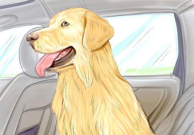 अपने कुत्ते के साथ कार द्वारा यात्रा कैसे करें