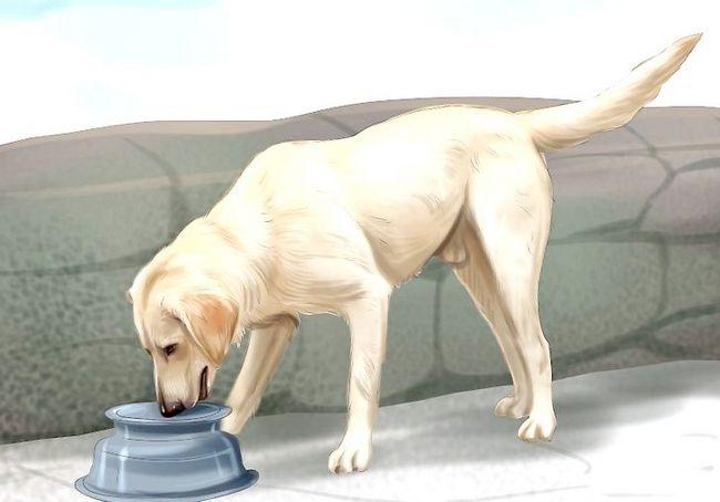 आपका कुत्ता चरण 12 के साथ कार द्वारा यात्रा शीर्षक वाली छवि