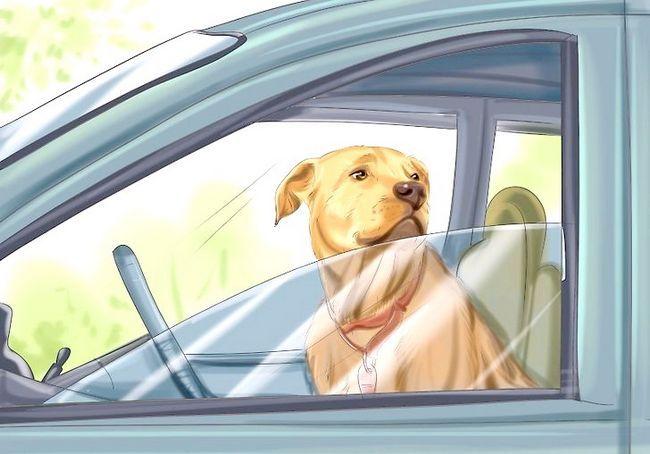 आपका कुत्ता चरण 13 के साथ कार द्वारा यात्रा शीर्षक वाली छवि