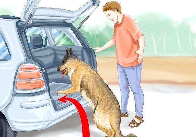 आपका कुत्ता चरण 9 के साथ कार द्वारा यात्रा शीर्षक वाली छवि