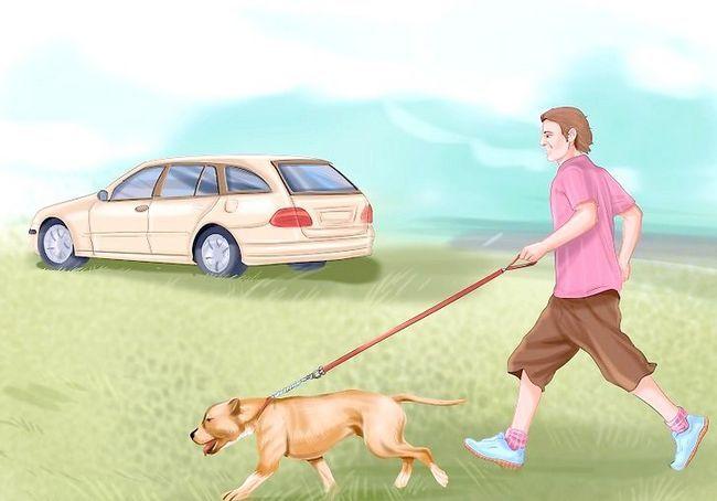 आपका कुत्ता चरण 10 के साथ कार द्वारा यात्रा शीर्षक वाली छवि