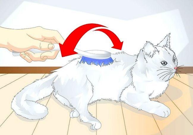 बिल्ली को खराब कैसे करें