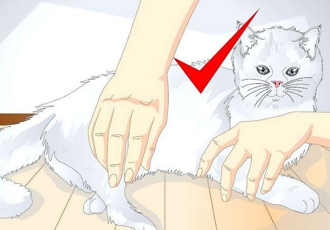 छवि शीर्षक स्पोइल आपका बिल्ली चरण 11