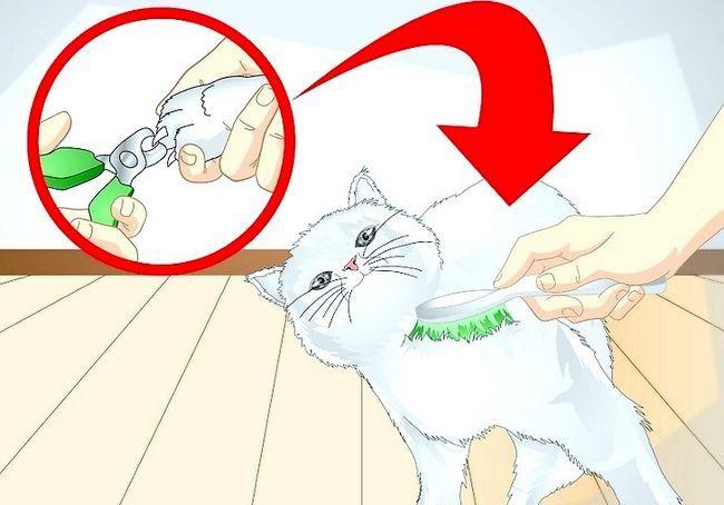 छवि शीर्षक स्पोइल आपका बिल्ली चरण 12