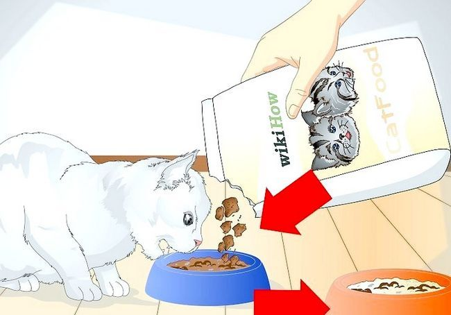 स्पोइल आपका बिल्ली स्टेप 13 नामक छवि
