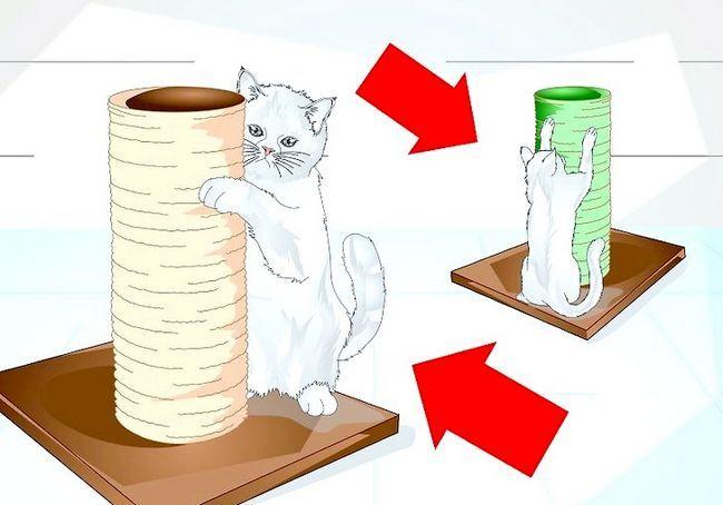 छवि शीर्षक स्पोइल आपका बिल्ली चरण 4