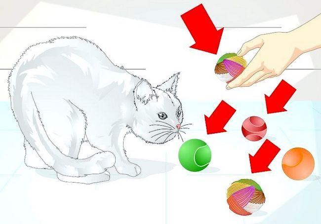 छवि का शीर्षक स्पोइल आपका कैट चरण 5