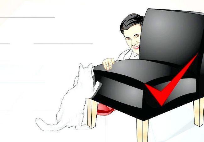 छवि शीर्षक स्पोइल आपका बिल्ली चरण 6