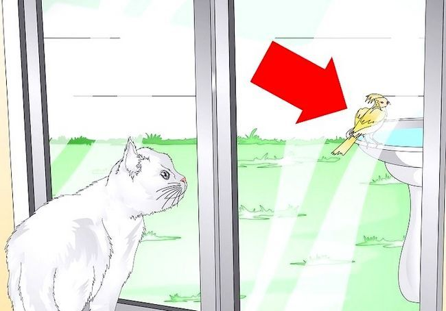 छवि शीर्षक स्पोइल आपका बिल्ली चरण 7