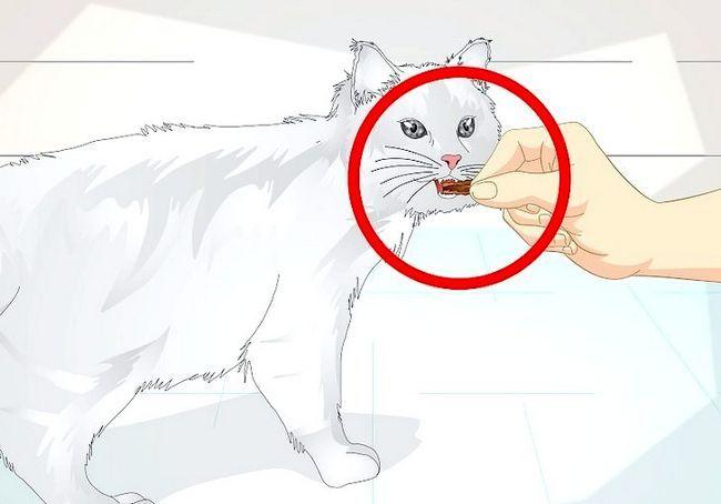छवि शीर्षक स्पोइल आपका बिल्ली चरण 8