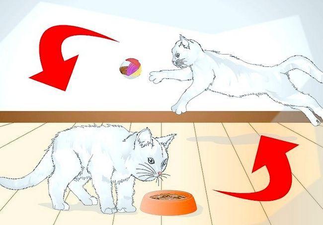 छवि शीर्षक स्पोइल आपका बिल्ली चरण 10
